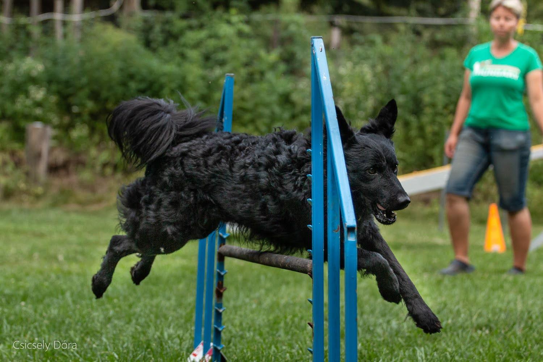 Magyarfajtás agility edzésünk Csordásvölgyben